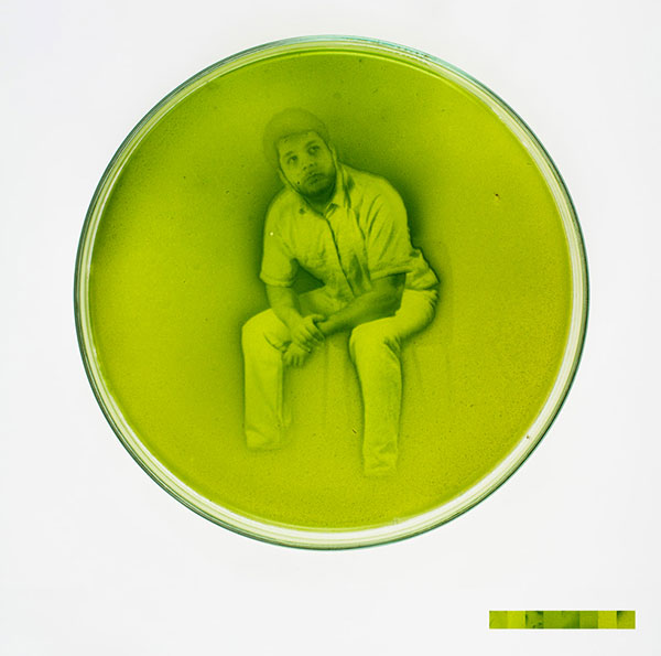 algae-photographs-1