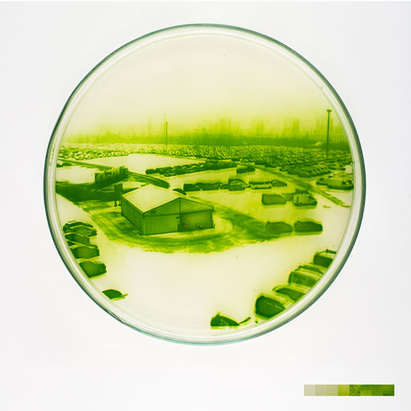 algae-photographs-2