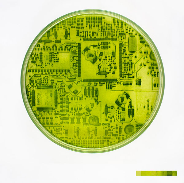 algae-photographs-3