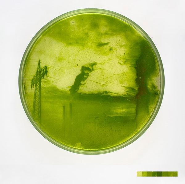 algae-photographs-4