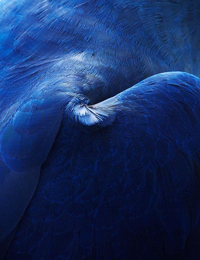 thomaslohr-Birds-1