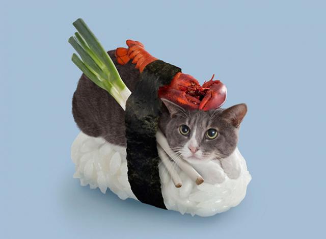 neko-sushi1