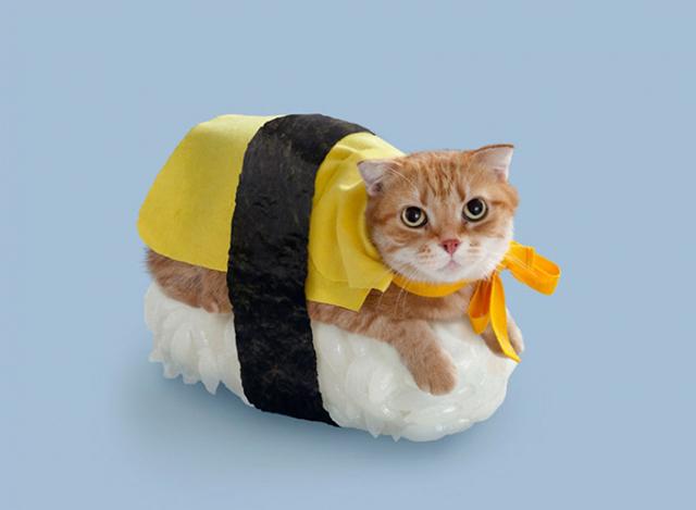 neko-sushi4